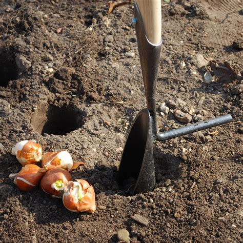 buy de wit tulip and daffodil bulb planter delivery by crocus