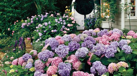 southern living ultimate garden guide 143 ideas for containers beds borders books the complete guide to hydrangeas southern living