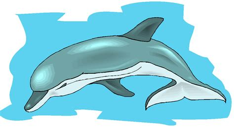 imagenes de amor animadas de delfines imagenes animadas de delfines imagui