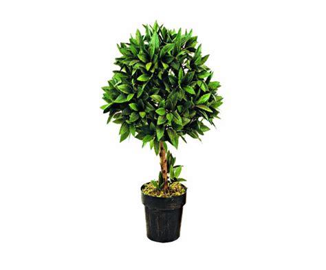 piante vaso pianta grassa in vaso