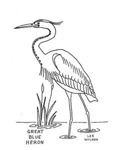 Great Blue Heron Coloring Page free great blue heron coloring pages