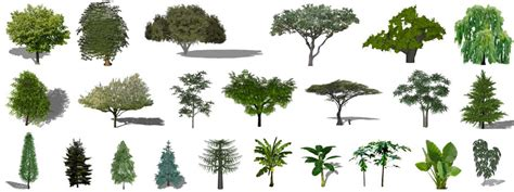 plant layout google sketchup sketchup plants trees and shrubs archive created by a