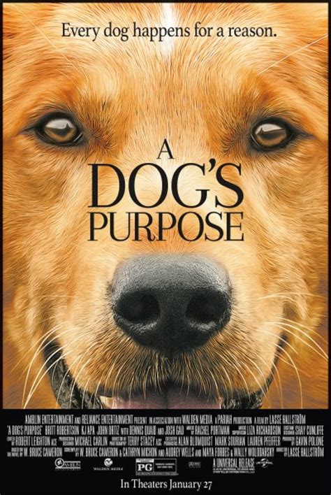 a dogs purpose free a s purpose free king s theatre