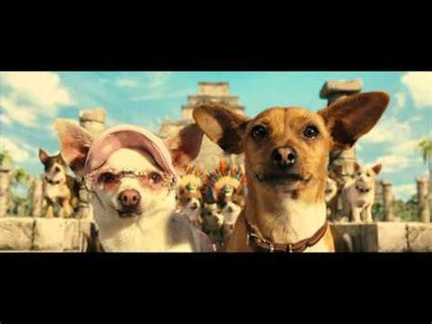 beverly chihuahua pug breed chihuahua ita funnydog tv