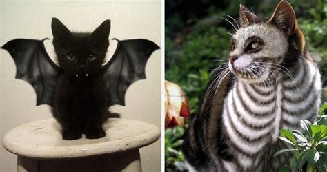 Home Design App On Love It Or List It 10 Terrifyingly Pawsome Halloween Cat Costumes Bored Panda