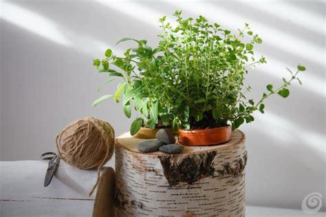 edera in casa le piante aromatiche sempre a portata di mano casa e trend