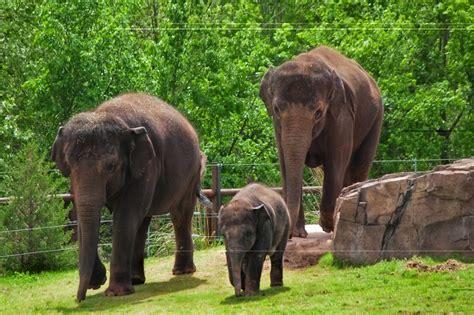Elephants Are On The Road To Oklahoma City Zoo