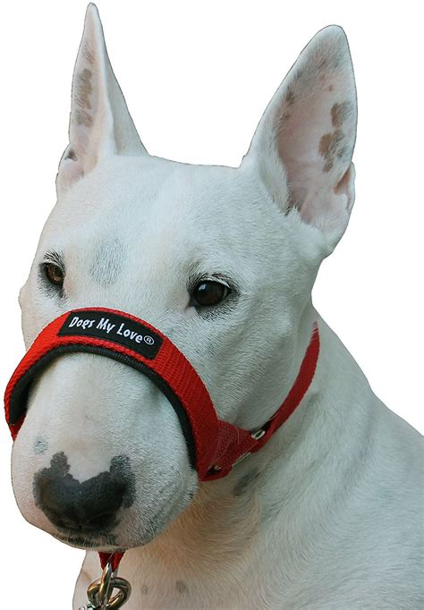 dogs  love halter dog head collar red medium chewycom