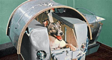 laikas  today   soviet union sends  living creature  orbit sputnik
