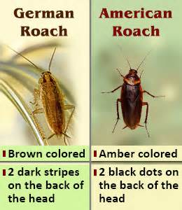 how to get rid of roaches permanently fast and naturally