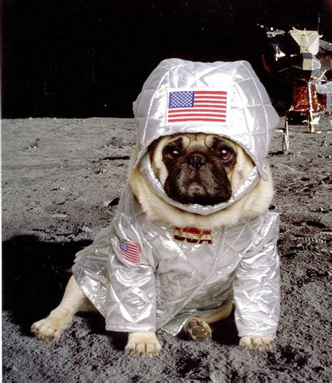 pug events 17 best images about pugs on pug pug and pets