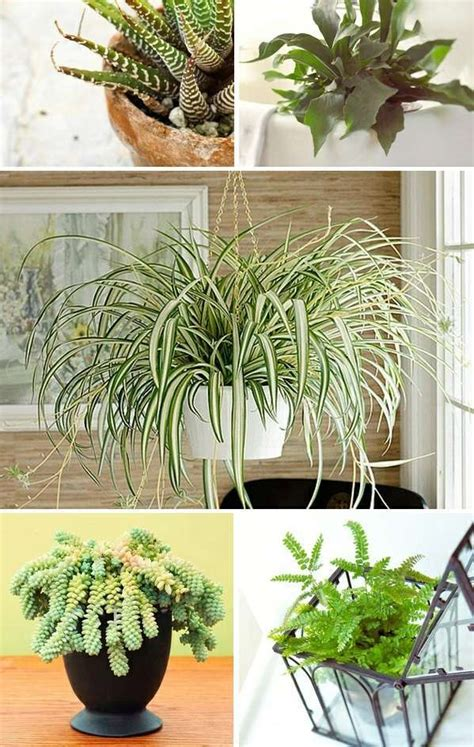 Indoor Plants That Need Little Light | best indoor plants little light what indoor plants need little light interior design