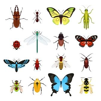 insectanatomy free insect animal pictures gallery cartoon insects icon vector pack vector free download