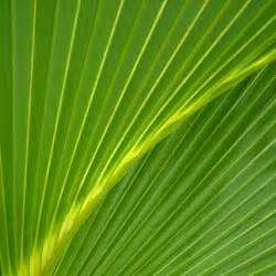 palm leaves ipad backgrounds best ipad wallpaper wallpaper