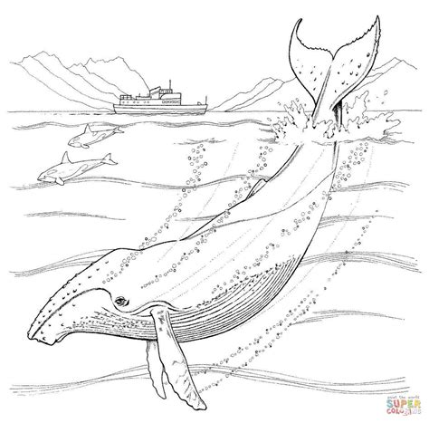 Humpback Whale Coloring Online Super Coloring Humpback Whale Coloring Page