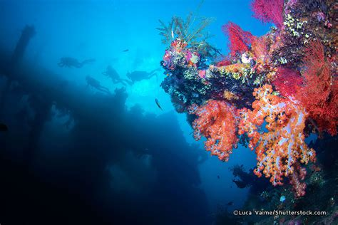 best dive 5 best dive in bali where to go scuba diving in bali