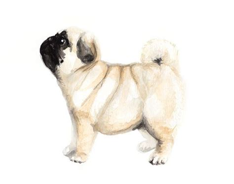watercolor pug 1000 ideas about watercolor painting on watercolor ideas watercolor