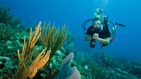 dive dive dive phuket open water diver course learn to scuba dive with