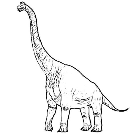 Free Coloring Pages Of A Brachiosaurus