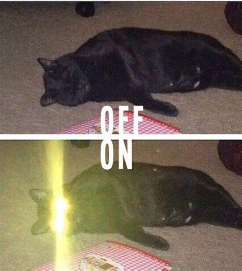 Laser Cat Meme - team jimmy joe 17 oddly funny pics memes from vintage