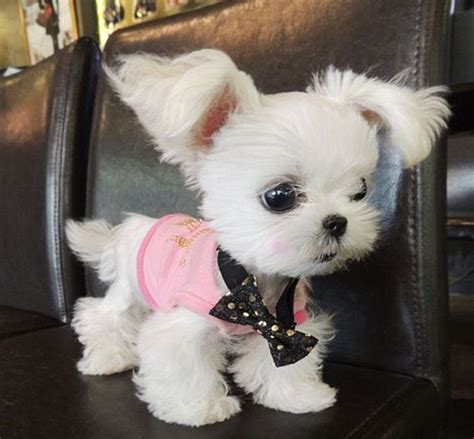 the cutest dogs in the world the cutest in the world according to instagram usrs daily mail