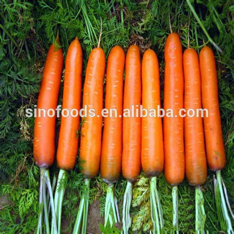 vegetable seeds for sale hu luo bo carrot seeds vegetable seeds for sale buy