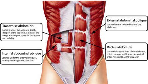 exercise proven   flatten  belly  improve