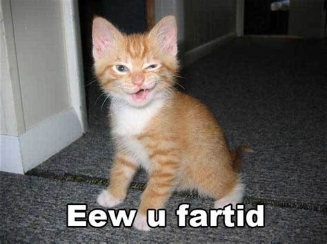 Cat Fart Meme - i farted funny cats quotes quotesgram