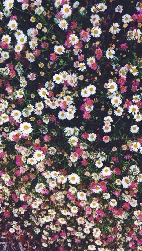 flower pattern lock pink white daisies floral iphone phone wallpaper