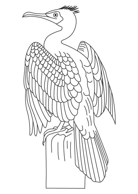 zoology coloring book 78 best images about zoology on birds