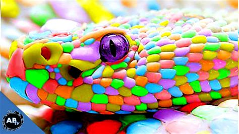 colorful picture colorful snakes snakebytestv ep 413