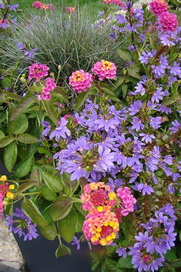 annual garden flowers annual flowers to consider for your garden this year