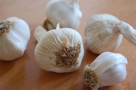 my ate garlic 4 ways to consume garlic