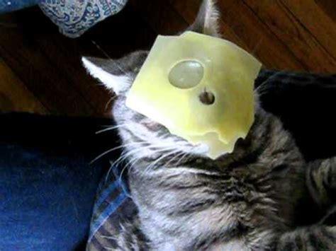 kitty cheese head youtube
