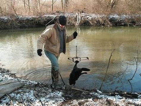 open conibear trap open water beaver trapping youtube