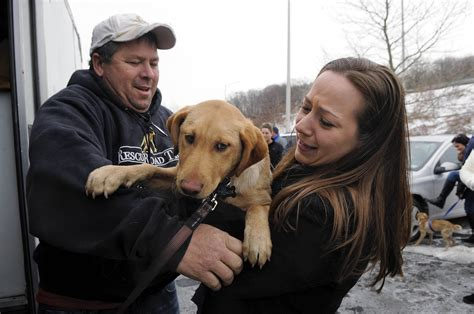 rescue dogs ohio eye contact photo category archives photojournalism