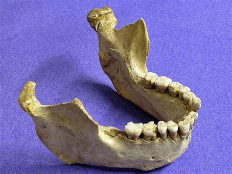 wann lebten die neandertaler jochen ebmeier wann sind die neanderthaler ausgestorben