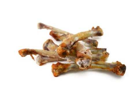 what to do if eats chicken bones what to do if your ate chicken bones american kennel club