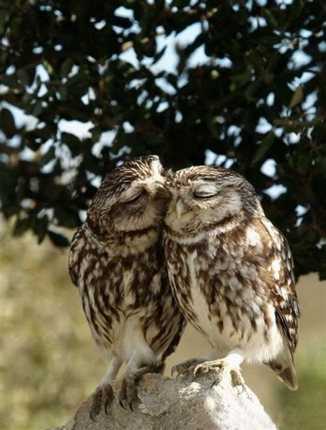 Owl Lover Owl Quotes Quotesgram