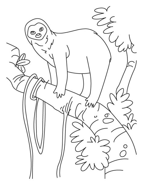 1 sloth coloring book best sloth coloring book for adults animals coloring book about sloths volume 1 books sloth a slowest animal on earth coloring pages