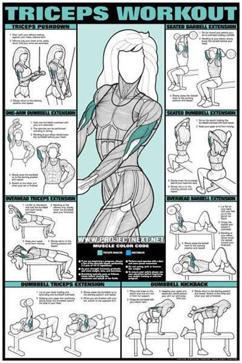 triceps diagram triceps diagram workouts