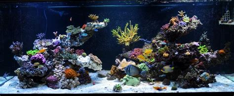 show your large tank aquascape page 5 reef2reef