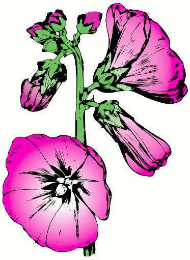 Flower Hollyhock - hollyhock 2 plants flowers h hollyhock hollyhock 2 png