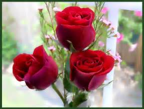 Rose Flower Images by Red Rose Flowers Flowers Wallpapers Rose Wallpapers