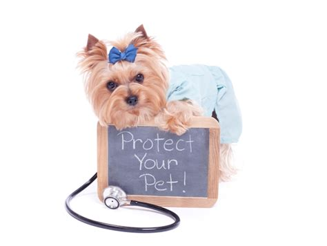 puppy insurance carolina and south carolina pet health insurance