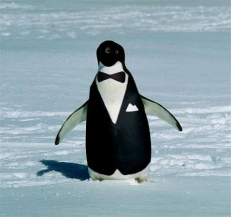 Cute Penguin Meme - cute penguin meme memes