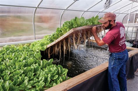 Cape House Designs synergetic farming fish and plants puts fresh food on