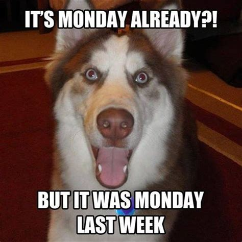 Funny Monday Memes - monday again really funny memes pinterest mondays