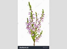 The heather plant clipart - Clipground House With Garden Clipart