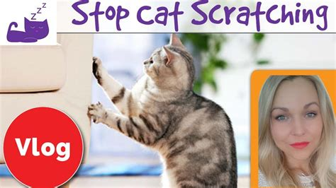 how to stop cat from scratching sofa how to stop your cat from scratching your furniture 3